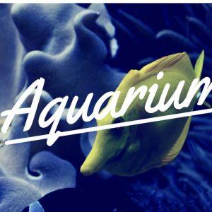 Как да изберем изгоден аквариум