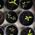 Кои видове почви са най-популярни в градинарството?